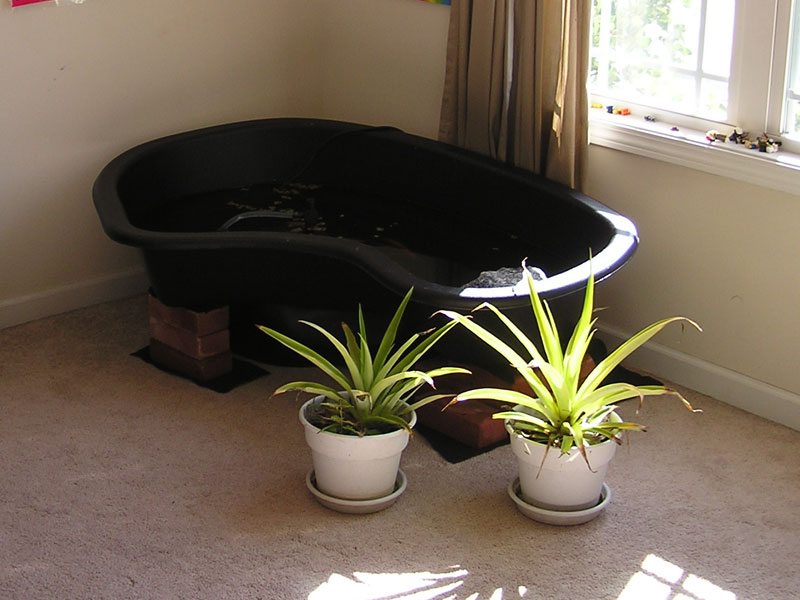 View topic diy pond for Indoor pond